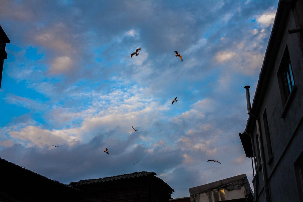 Birds at sunset, David Gross